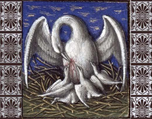 pelicano_marco